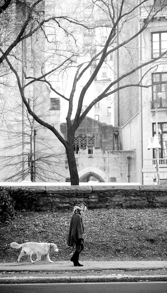 New York City.  Dog, Tree and Lady in Hat